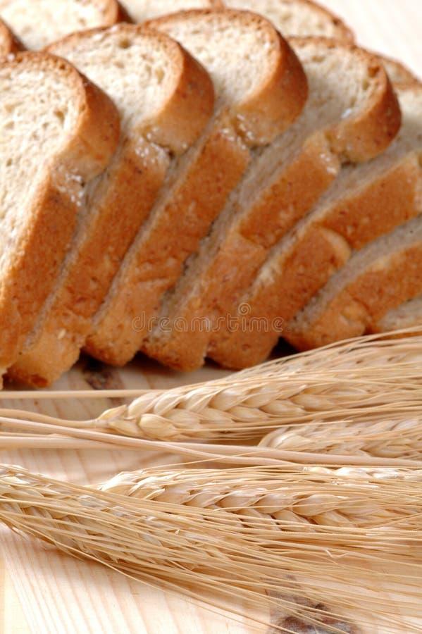 pszenica chlebowa zdjęcia royalty free