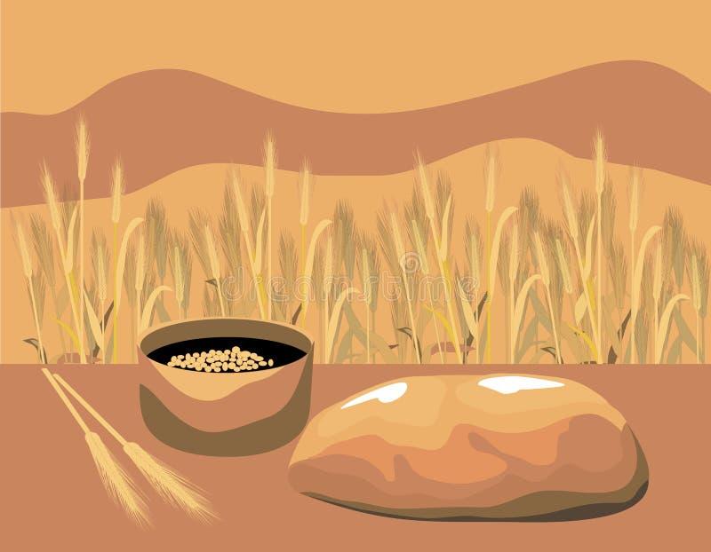 pszenica chlebowa ilustracja wektor