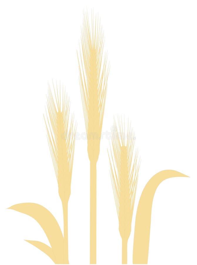 pszenica odizolowana ilustracji