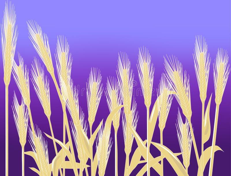 pszenica tło royalty ilustracja