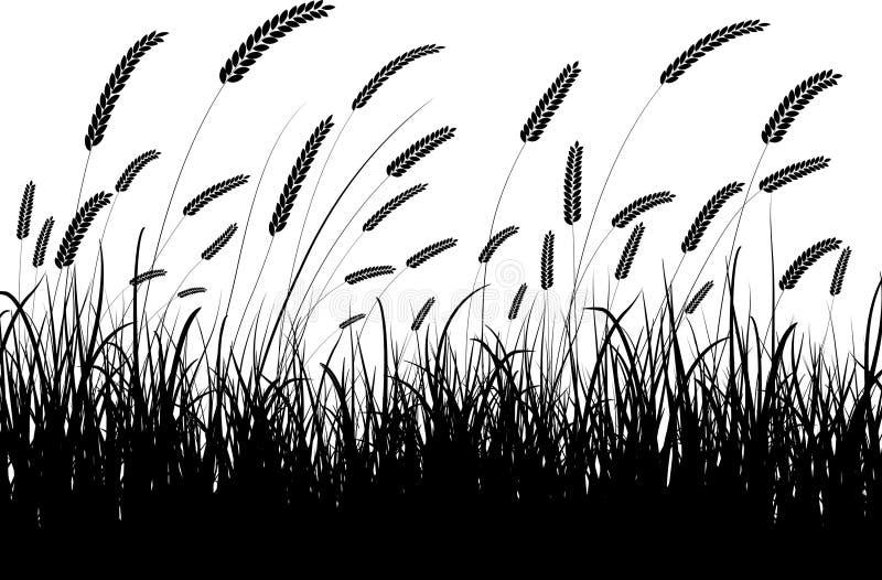 pszenica trawy ilustracja wektor