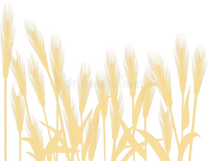 pszenica złota royalty ilustracja