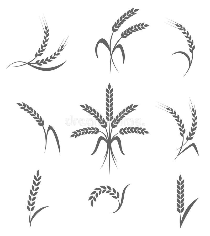 Pszeniczni ucho lub ryżowe ikony ustawiający Rolniczy symbole na białym tle ilustracja wektor