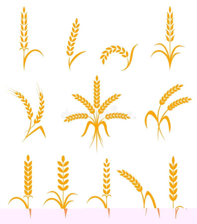 Pszeniczni ucho lub ryżowe ikony ustawiający Rolniczy symbole odizolowywający na białym tle royalty ilustracja