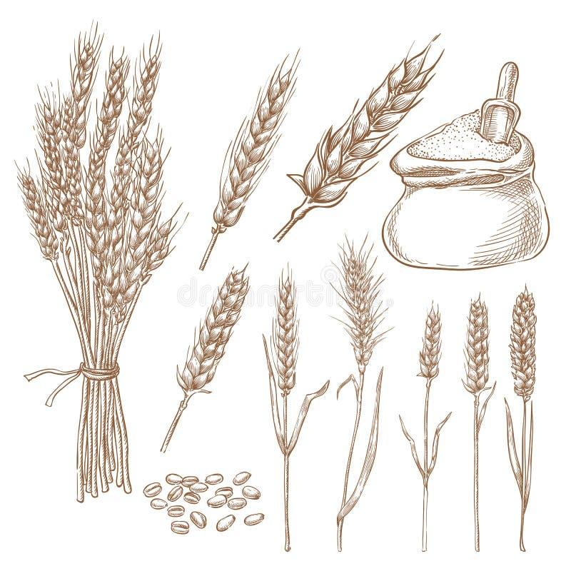 Pszeniczni zboży spikelets, adra i mąki torby nakreślenia wektorowa ilustracja, Ręka rysujący odizolowywający piekarnia projekta  ilustracji