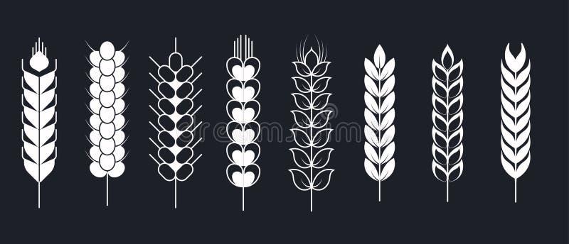 Pszeniczny i jęczmienny żyto jagieł spikelets i kolce lub odizolowywaliśmy rośliny ilustracji