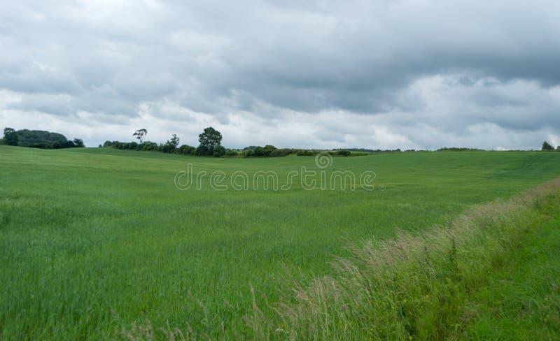 Download Pszeniczny Pole Na Chmurzącym Dniu Obraz Stock - Obraz złożonej z dzień, wiejski: 106906311