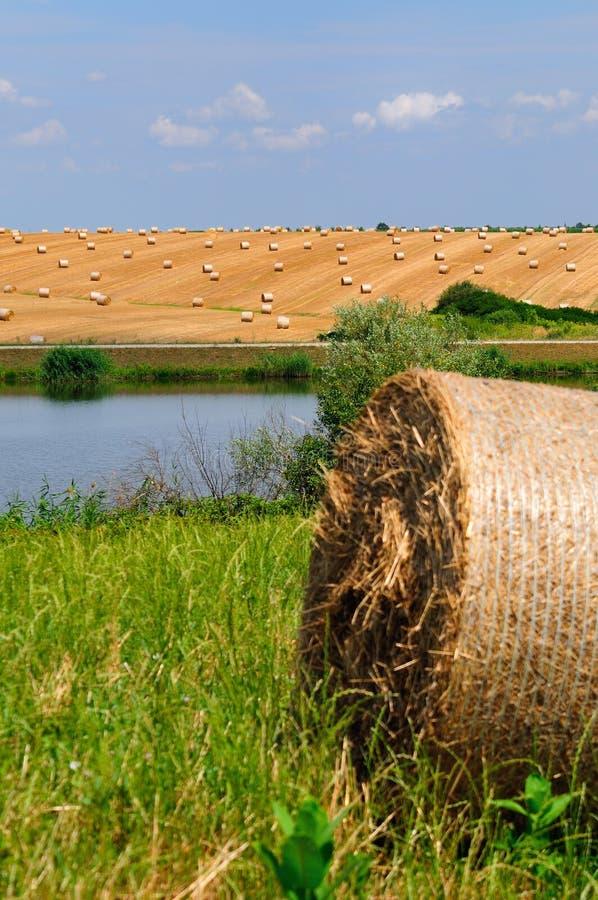 Pszeniczny pole obok jeziora obrazy stock