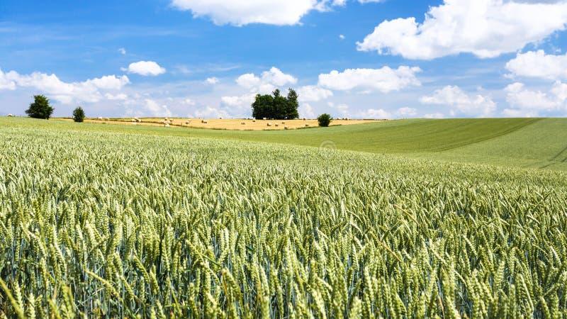 pszeniczny pole pod niebieskim niebem z chmurami w Picardy obraz royalty free