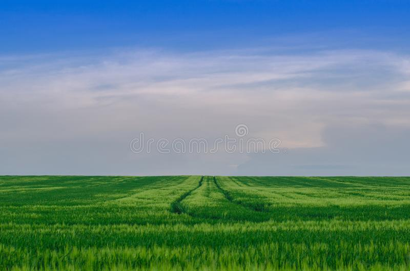 Pszeniczny pole, Ukraina obraz royalty free