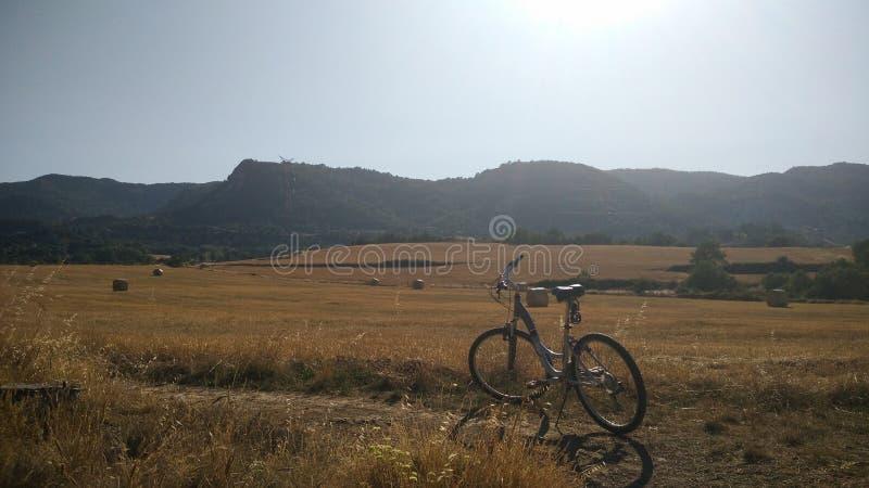 Pszeniczny pole z rowerem zdjęcie royalty free