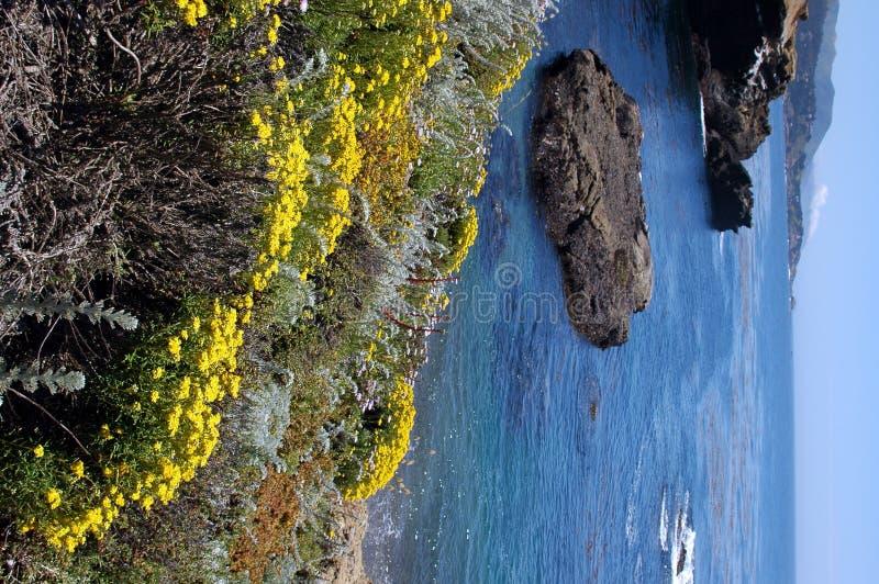 PT Lobos royalty-vrije stock afbeeldingen