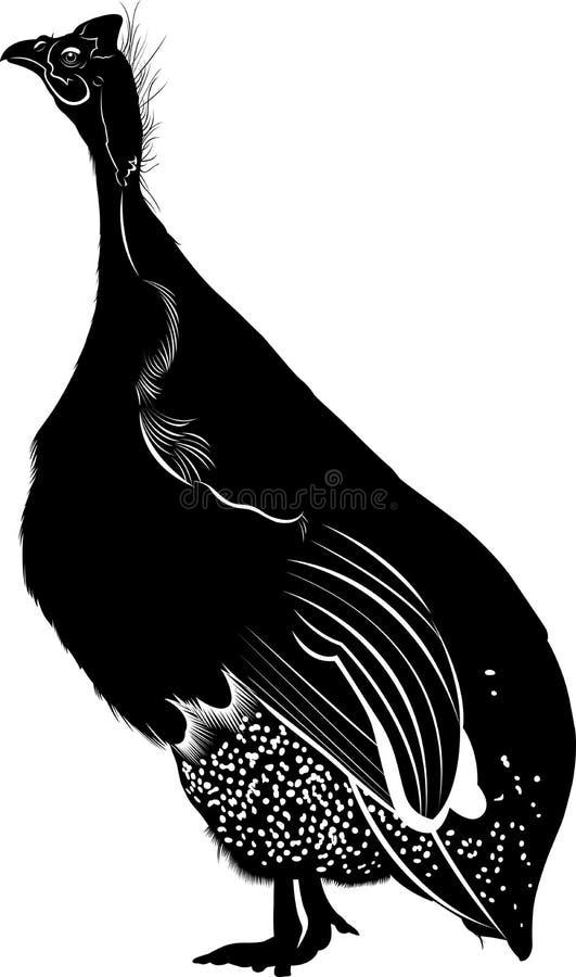 ptactwo gwinea ilustracja wektor