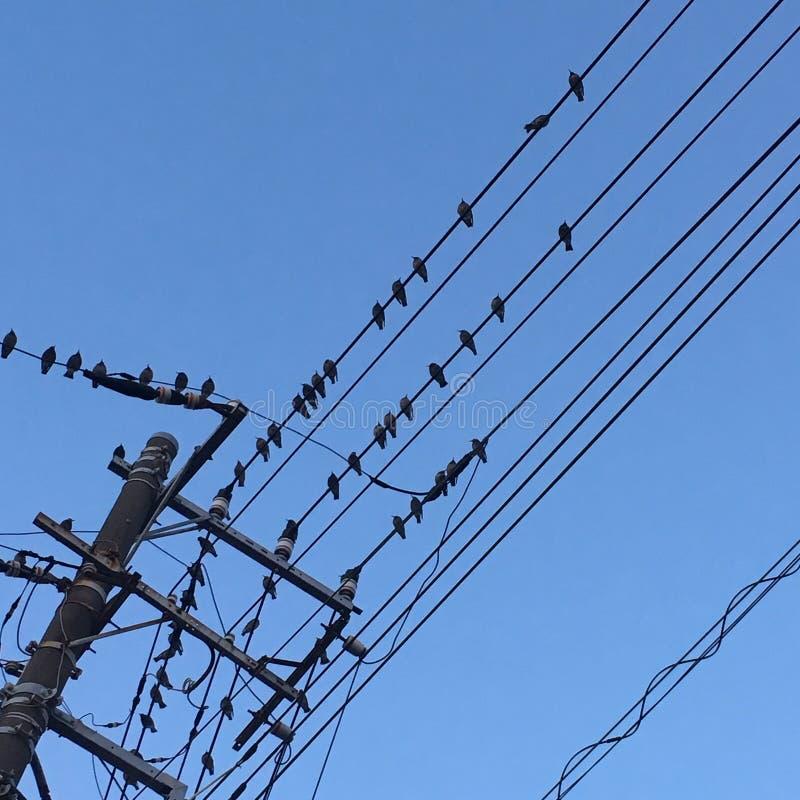 Ptaków czekać zdjęcie royalty free