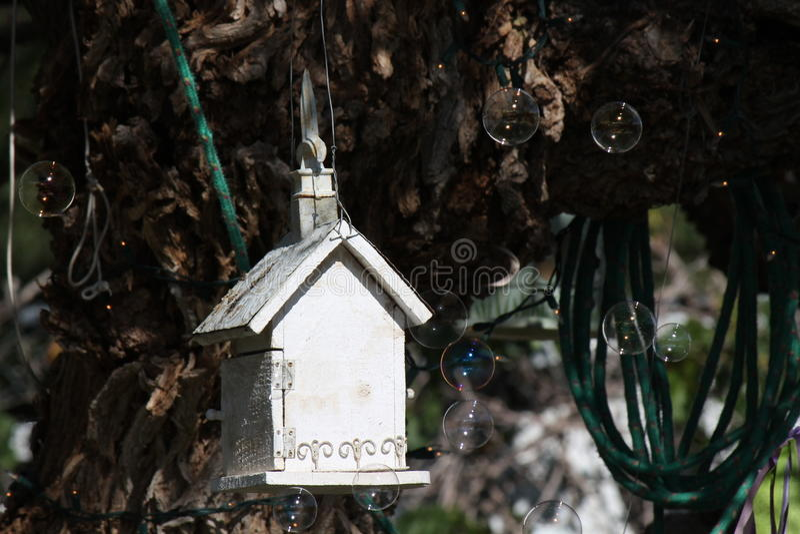 Ptaków domowi i mydlani bąble zdjęcia royalty free
