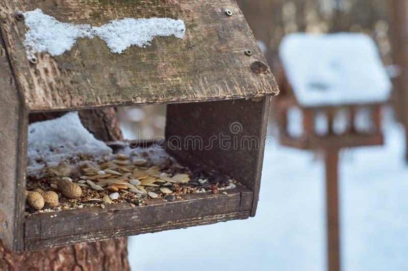 Ptaków dozowniki z ziarnami zdjęcie royalty free