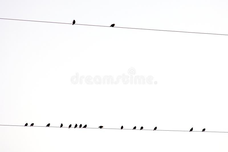 ptaków elektryczny grupowy nieba biel drut zdjęcie stock