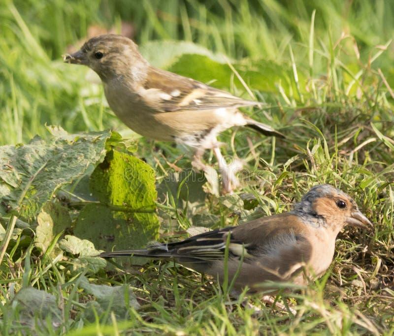 Ptaków karmić obrazy stock