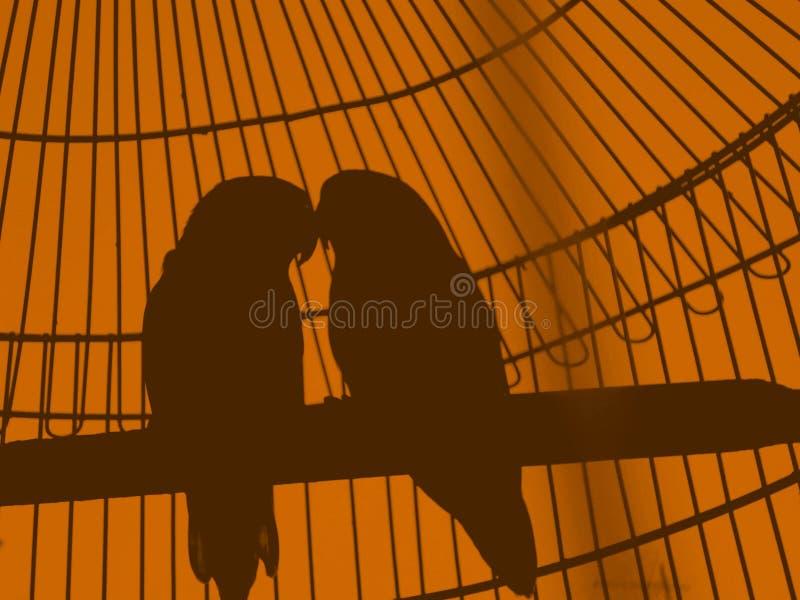 ptaków karty pary ramy zaproszenia s valentine rocznik obraz royalty free