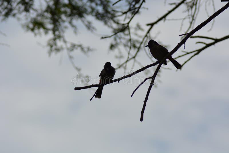 Ptaków odpoczywać obraz stock
