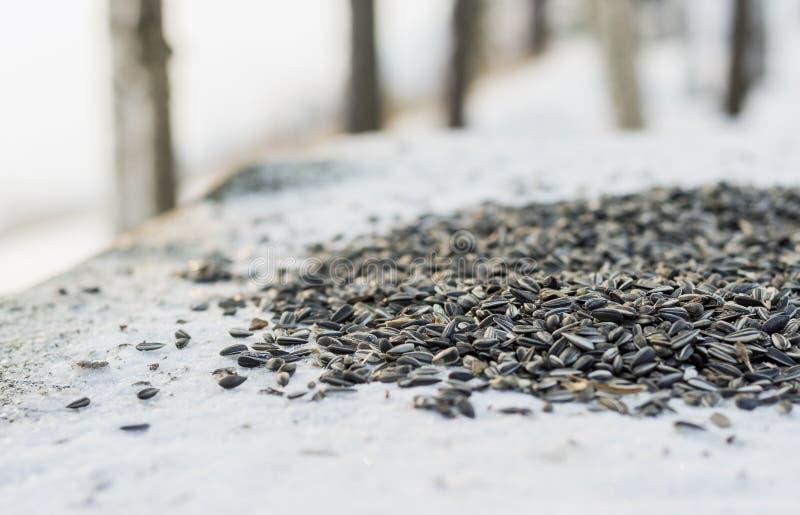 Ptaków ziarna na śnieżnej skale obrazy stock