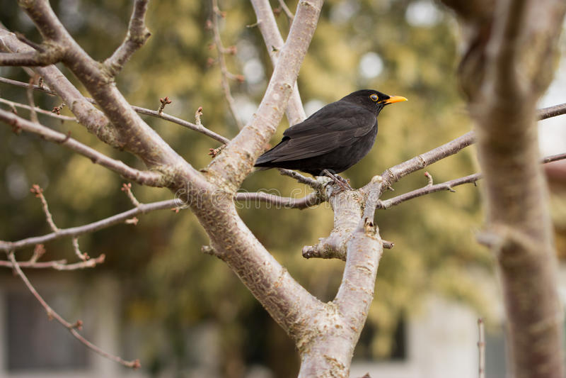 ptak ładny fotografia royalty free