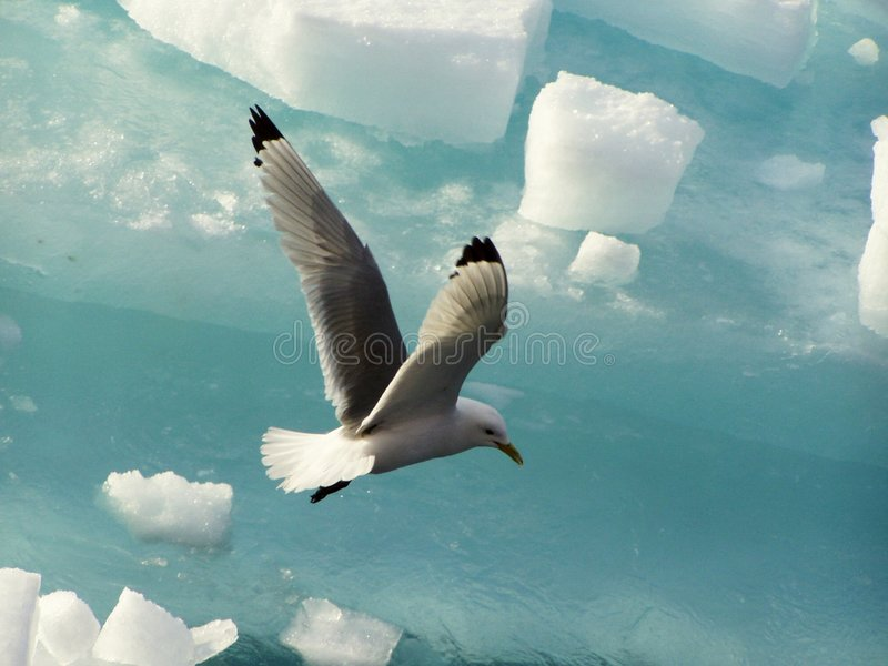 ptak obraz royalty free