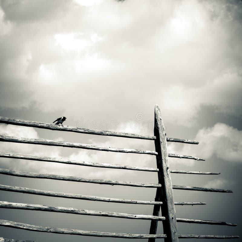 Download Ptak zdjęcie stock. Obraz złożonej z czerń, cisza, ptak - 53783284