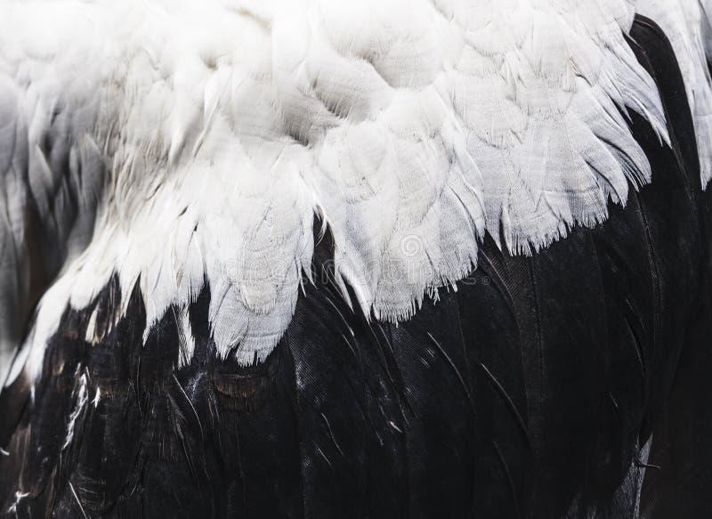 Ptak cecha zamknięta w górę zwierzęcia skrzydła natury tła zdjęcie stock