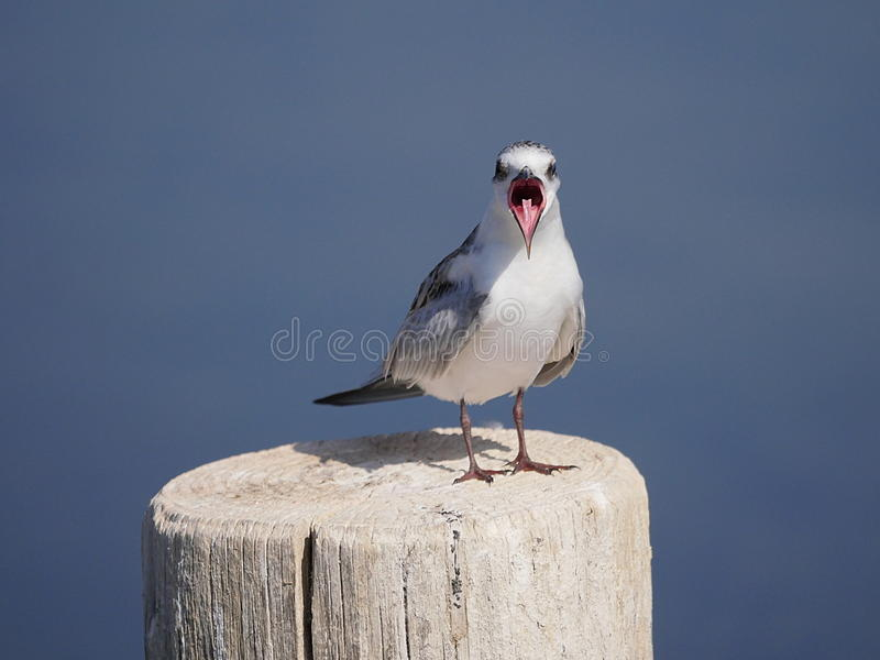 Ptak daje mowie obrazy royalty free