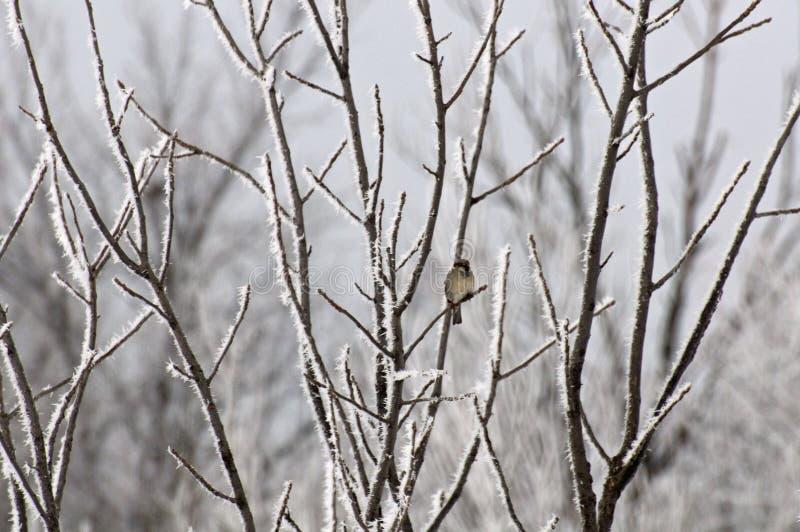 ptak drzewo samotny drzewo zdjęcie stock