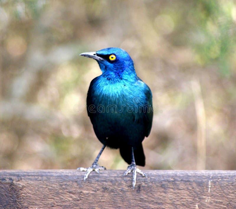 ptak dziki zdjęcia stock