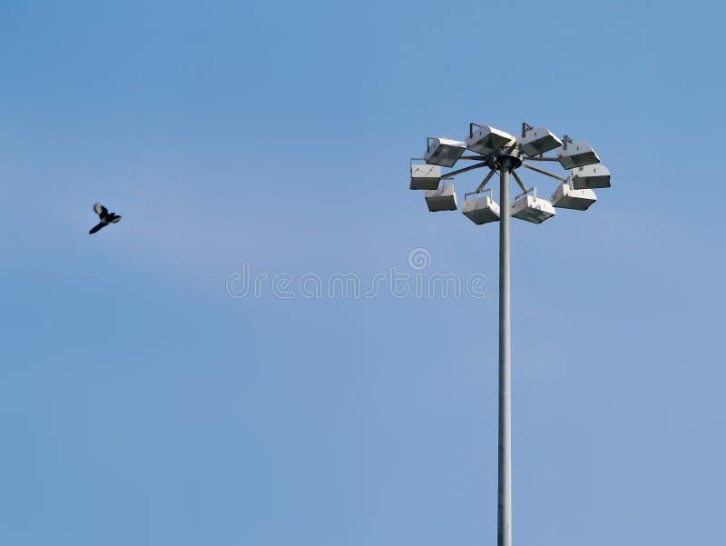 Ptak i floodlights zdjęcia stock