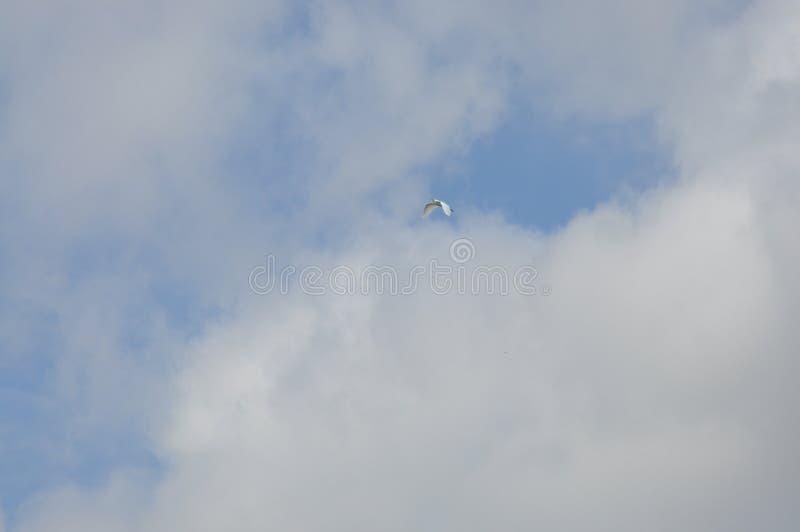 Ptak i niebo obraz stock
