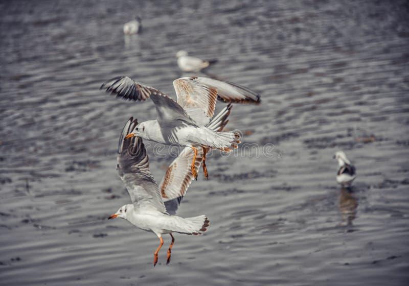 Ptak i rzeka obraz royalty free