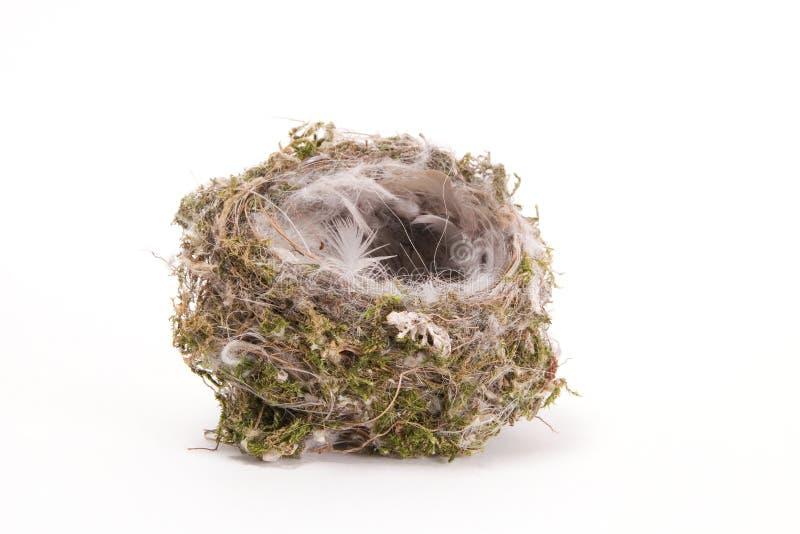 ptak jest gniazdo obrazy stock