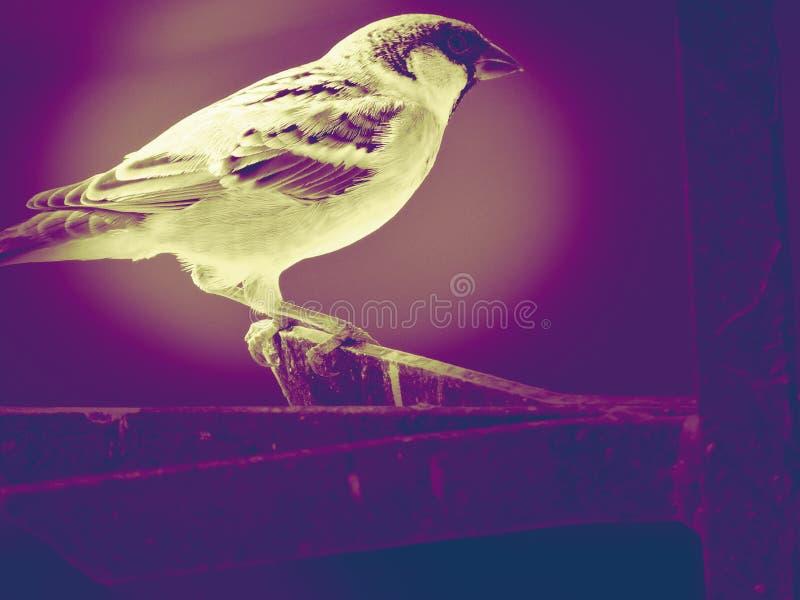Ptak jest istnym pięknem obraz stock