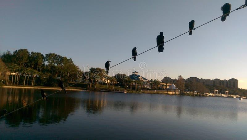Ptak jeziora natura zdjęcia stock