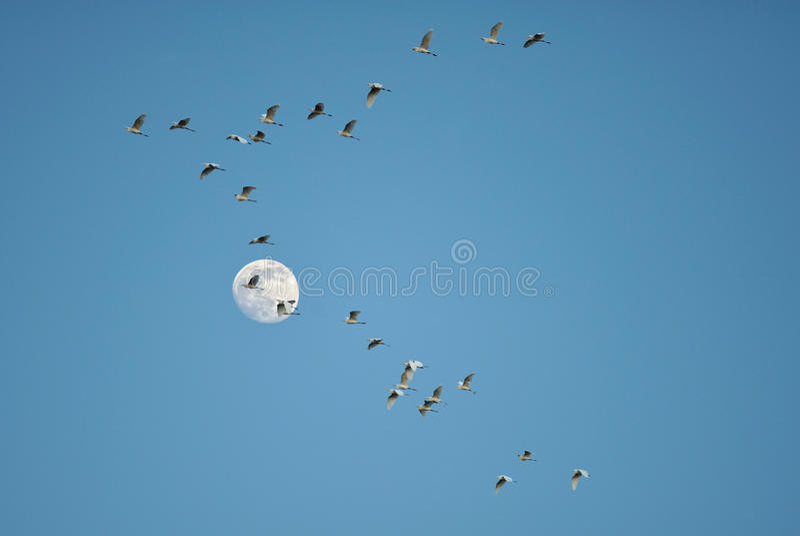 ptak księżyc zdjęcie royalty free