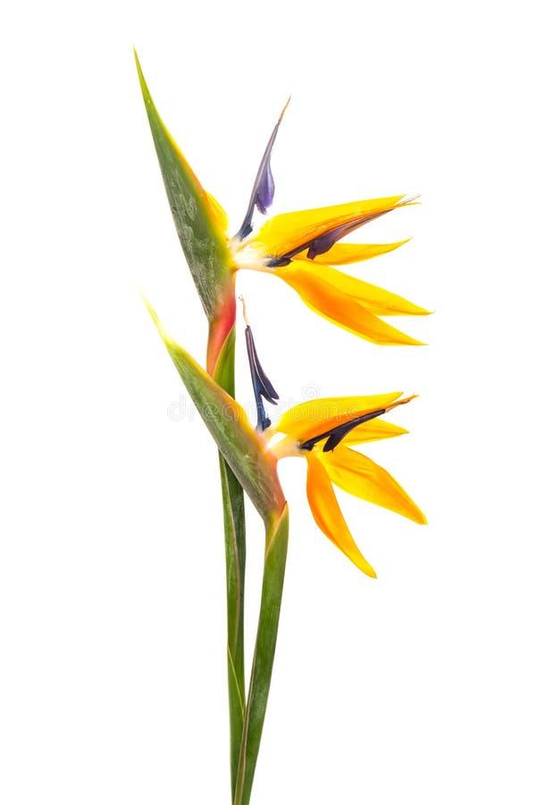 ptak kwiaty do raju zdjęcie royalty free