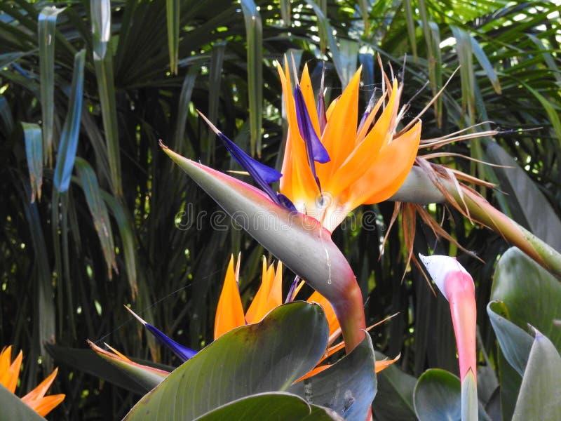 ptak kwiaty do raju fotografia royalty free