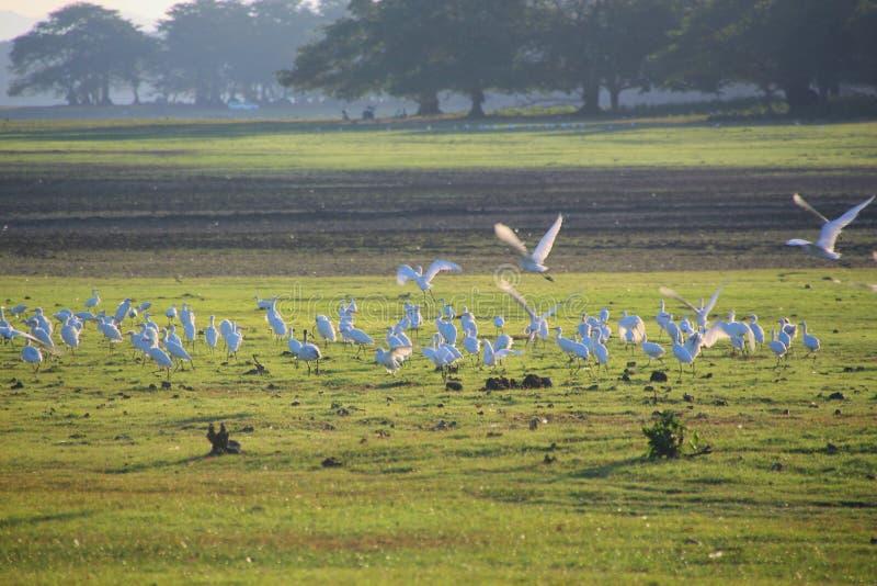 Ptak miłości evening obraz royalty free