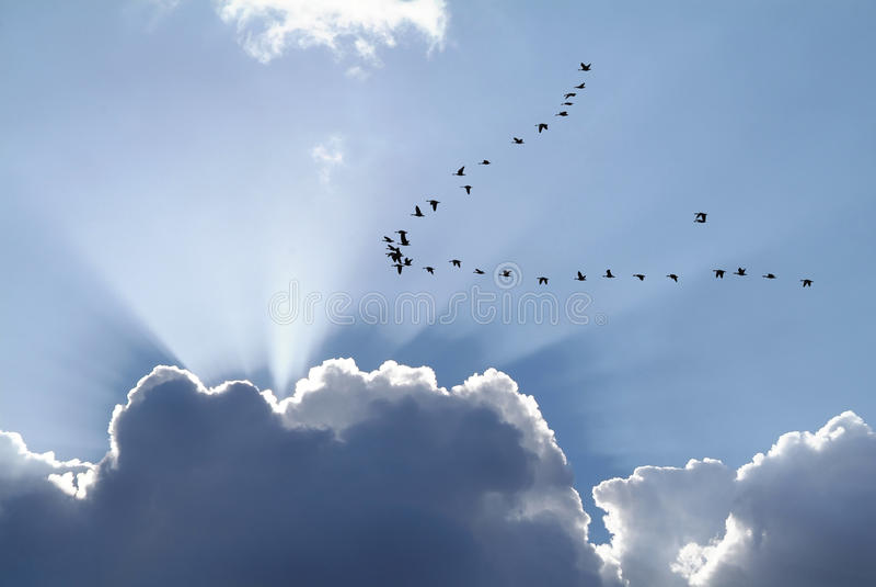 Ptak migrujący obrazy stock