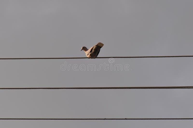 Ptak na drucie zdjęcie stock