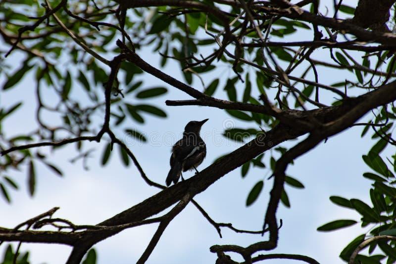 Ptak na drzewie w ogródzie obrazy stock