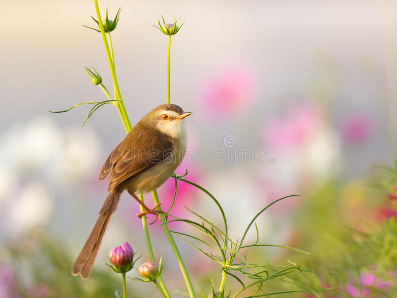 Ptak na kwiacie w ogródzie zdjęcie royalty free