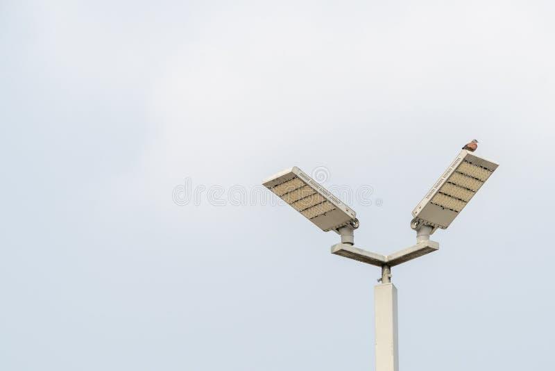 Ptak na lampie na niebieskiego nieba tle obraz royalty free