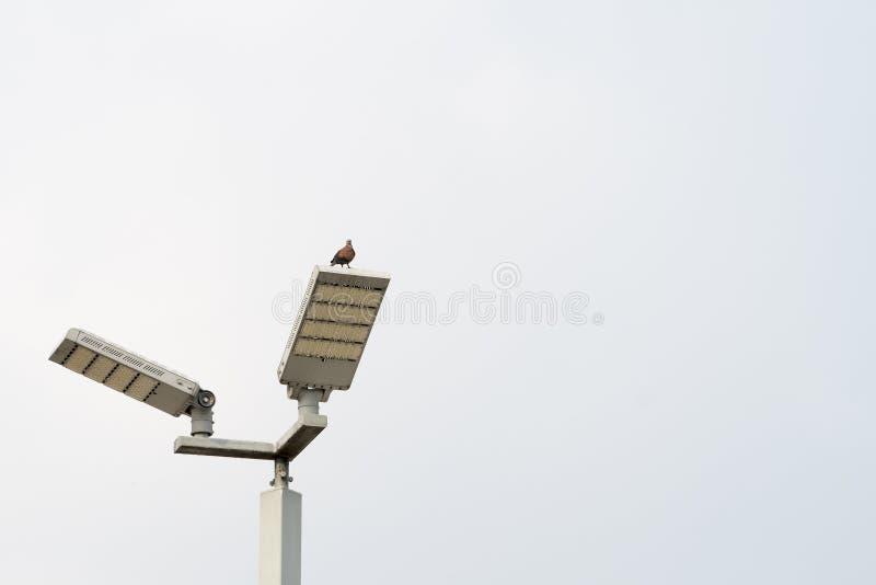 Ptak na lampie na niebieskiego nieba tle obraz stock