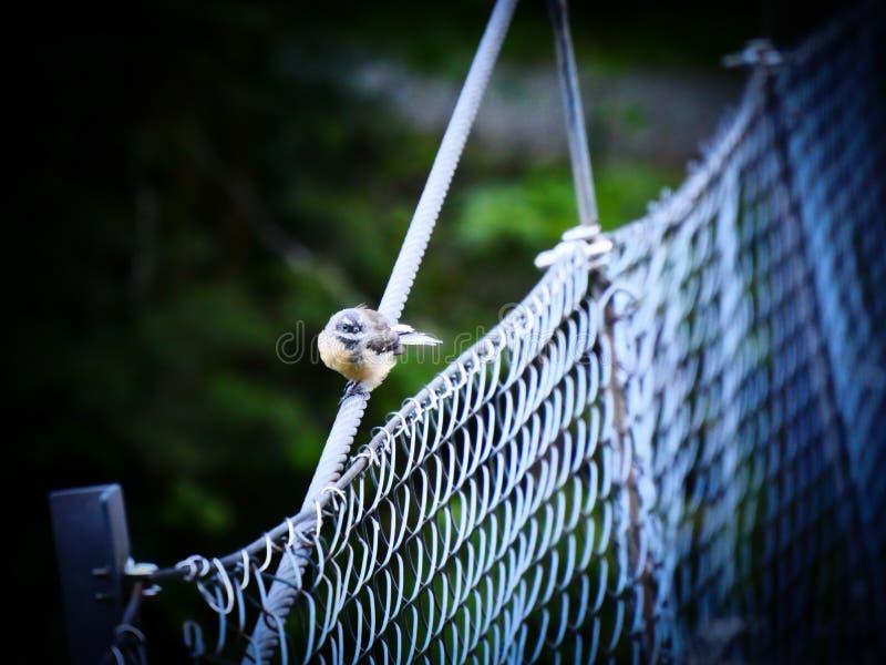 Ptak na moscie fotografia royalty free