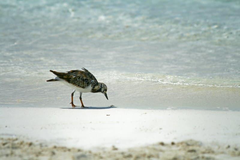 ptak na plaży zdjęcie royalty free